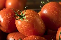 Raw Red Organic Roma Tomatoes Royalty Free Stock Photos