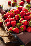 Raw Red Organic Strawberries Stock Photography