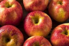 Raw Red Organic Sweet Tango Gala Apples Stock Photo