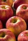 Raw Red Organic Sweet Tango Gala Apples Royalty Free Stock Image