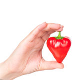 Raw red pepper. In the form of heart in the hand isolated over white background Royalty Free Stock Images