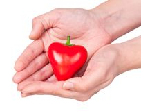 Raw red pepper. In the form of heart in the hand isolated over white background Stock Image