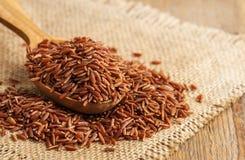 Raw red rice Stock Photos