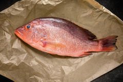 Raw Red snapper fish on backing paper, ready for coocking, top v. Iew Stock Images