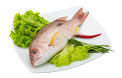 Raw red snapper. With salad leaves Royalty Free Stock Image