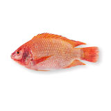 Raw Red tilapia Royalty Free Stock Image