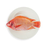 Raw Red tilapia Royalty Free Stock Images