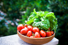 Raw red tomato and basil fresh Royalty Free Stock Photos