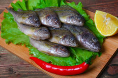 Raw redfish ruff fish on the kitchen table with vegetables and lemon Royalty Free Stock Photo