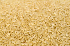 Raw rice grains closeup Stock Photography