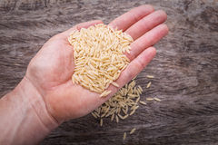 Raw rice in a man's hand. On a background of a wooden texture. Royalty Free Stock Images
