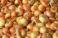 Raw Ripe Onion Closeup. As Natural Background Stock Images