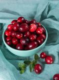 Raw ripe red cranberry berries in light blue bowl. Close up royalty free stock photos