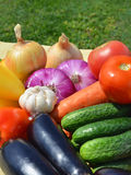 Raw, ripe vegetables on the grass Royalty Free Stock Image