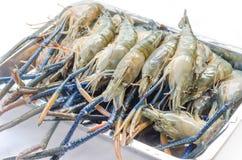 Raw river prawn Royalty Free Stock Image