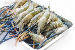 Raw river prawn Royalty Free Stock Images