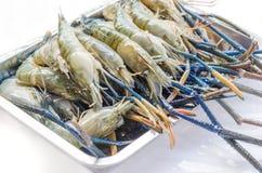 Raw river prawn Stock Photos