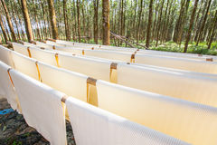 Raw rubber sheets in Thailand Royalty Free Stock Photography