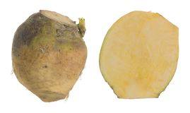 Raw rutabaga, whole and cut root isolated on white background. Closeup of a raw rutabaga, whole and cut root isolated on white background Stock Photo
