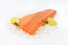 Raw salmon fillet. On ice Royalty Free Stock Photography