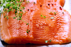 Raw salmon fillets. On aluminium trey with lemon and spices Royalty Free Stock Photography