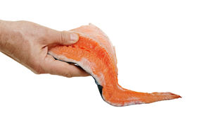 Raw salmon in hand. Stock Images
