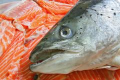 Raw Salmon Head on sliced salmon fillet. Raw Salmon Head on Heap of sliced salmon fillet Royalty Free Stock Photography