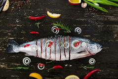 Raw salmon with oil, herbs and spices on dark rustic board. Top view. Fish preparing for cooking. Healthy food or diet nutrition concept Royalty Free Stock Photo