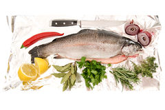 Raw salmon trout fish with fresh herbs and spices stock photo
