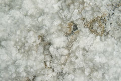 Raw Salt Texture Stock Images