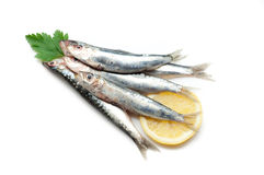 Raw sardines Stock Photo