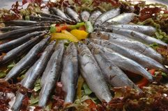 Raw sardines Stock Photography