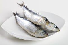 Raw sardines Stock Image