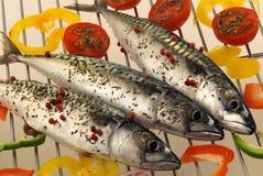 Raw sardines Stock Images