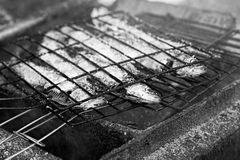 Raw sardines on barbecue Stock Images