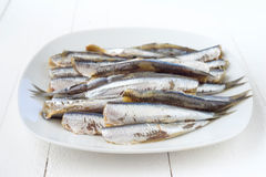 Raw sardines in dish on wood Royalty Free Stock Photo
