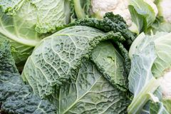 Raw Savoy cabbage on the the market Stock Images