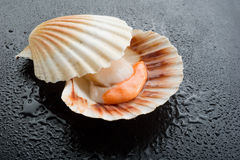 Raw scallop on black stone. Background Royalty Free Stock Photography