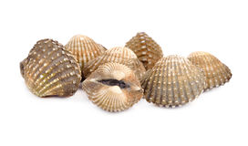 Raw scallop Royalty Free Stock Images
