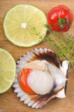 Raw scallop with lemon and tomato. Raw scallop with slice lemon, tomato and thyme on a wooden board Stock Photography