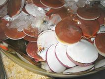 Raw scallop or raw shell. Shell, raw scallop or raw shell Royalty Free Stock Photo