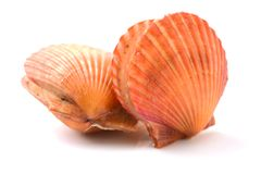 Raw scallop shell. Isolated on a white background stock photography