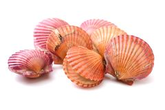 Raw scallop shell. Isolated on a white background royalty free stock photography