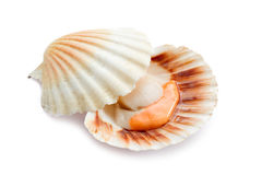 Raw scallop on white Royalty Free Stock Photo