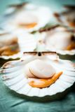 Raw scallops Stock Photos