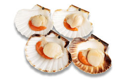 Raw scallops (Coquille St. Jacques). Four raw scallops  on white background with shadows Stock Photos