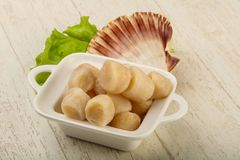 Raw scallops heap. In the bowl ready for cooking Royalty Free Stock Photo
