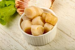 Raw scallops heap. In the bowl ready for cooking Royalty Free Stock Photography