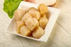 Raw scallops heap. In the bowl ready for cooking Royalty Free Stock Images