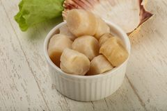 Raw scallops heap. In the bowl ready for cooking Royalty Free Stock Image